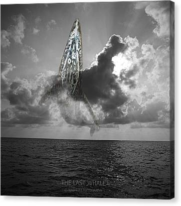 The Last Whale Canvas Print by Andy Frasheski