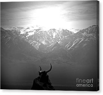 The Last Wild One Canvas Print by Megan Chambers