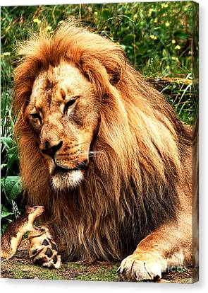 The Lion And The Mouse Canvas Print by Wingsdomain Art and Photography