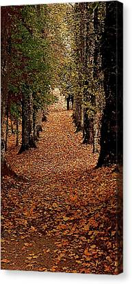 The Long Way Home Canvas Print by Jacquin