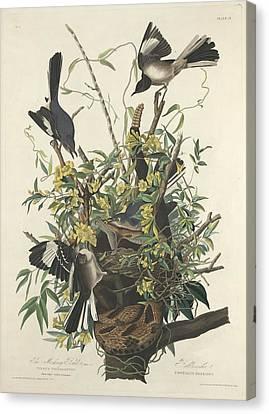 The Mockingbird Canvas Print by John James Audubon