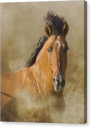 The Mustang Canvas Print by Ron  McGinnis