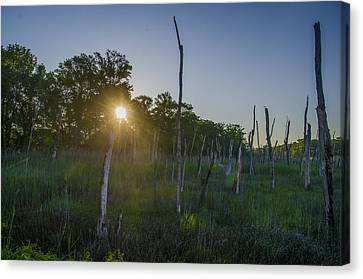 The New Jersey Pine Barrens Canvas Print by Bill Cannon