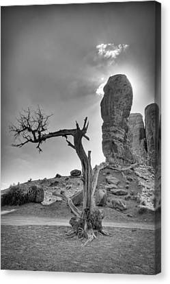The Old Tree Canvas Print by Andreas Freund