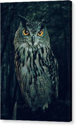 The Owl Canvas Print by Carlos Caetano