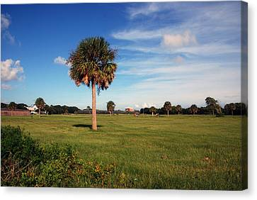 The Palmetto Tree Canvas Print by Susanne Van Hulst