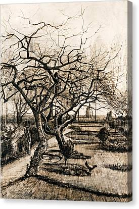 The Parsonage Garden At Nuenen In Winter Canvas Print by Vincent van Gogh