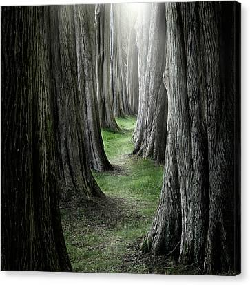 The Pathway Canvas Print by Ian David Soar