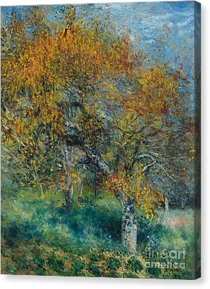 The Pear Tree Canvas Print by Pierre Auguste Renoir
