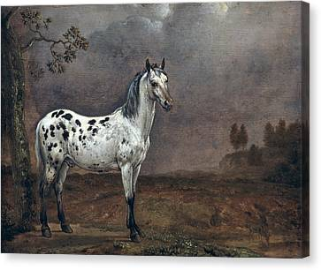 The Piebald Horse Canvas Print by Paulus Potter