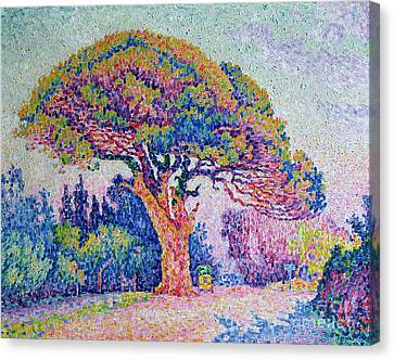 The Pine Tree At Saint Tropez Canvas Print by Paul Signac