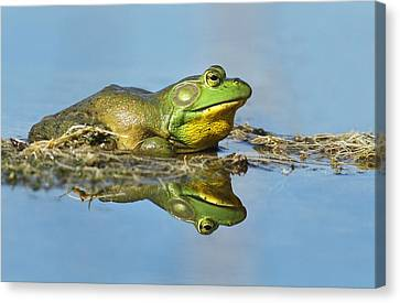 The Pond King Canvas Print by Mircea Costina Photography