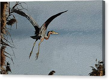 The Purple Heron Canvas Print by Manjot Singh Sachdeva