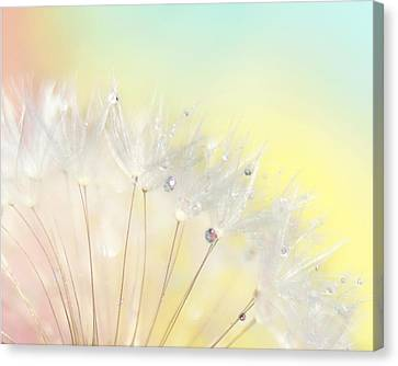 The Rainbow Connection Canvas Print by Amy Tyler