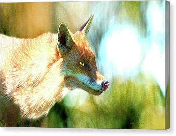 The Red Fox 660-painted Canvas Print by Ericamaxine Price