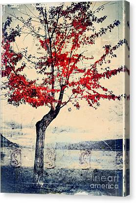 The Red Tree At Okanagan Lake Canvas Print by Tara Turner