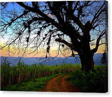 The Road Less Traveled Canvas Print by Skip Hunt