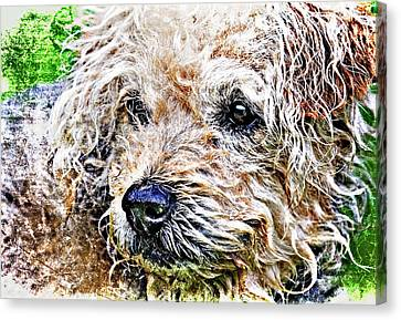 The Scruffiest Dog In The World Canvas Print by Meirion Matthias
