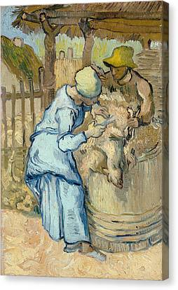 The Sheep-shearer, After Millet Canvas Print by Vincent Van Gogh