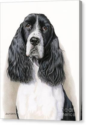 The Springer Spaniel Canvas Print by Sarah Batalka