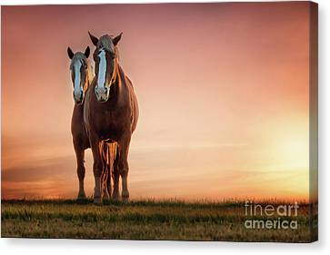 The Stallion And The Mare Canvas Print by Tamyra Ayles