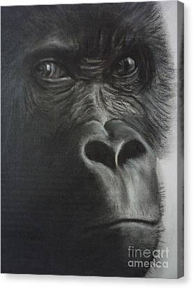 The Stare Canvas Print by Paul Horton