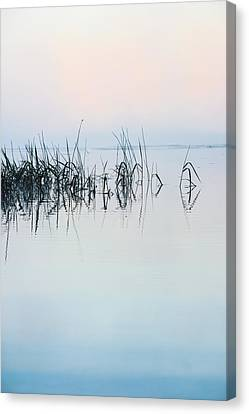 The Stillness Of Life Canvas Print by Shelby  Young