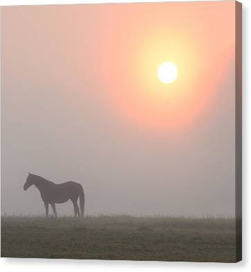 The Sun Burning Through The Fog In Whitemarsh Canvas Print by Bill Cannon