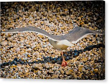 The Takeoff Canvas Print by Loriental Photography