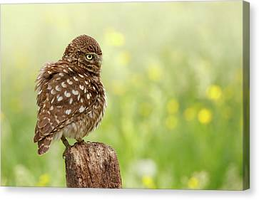 The Thinker -  Little Owl In A Flower Bed Canvas Print by Roeselien Raimond
