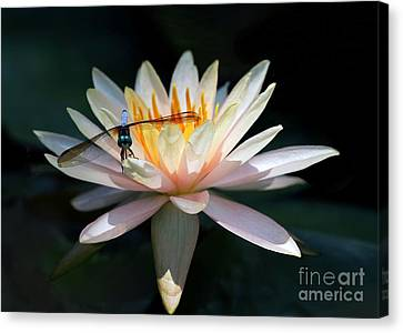 The Water Lily And The Dragonfly Canvas Print by Sabrina L Ryan