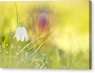 The White Queen Canvas Print by Roeselien Raimond