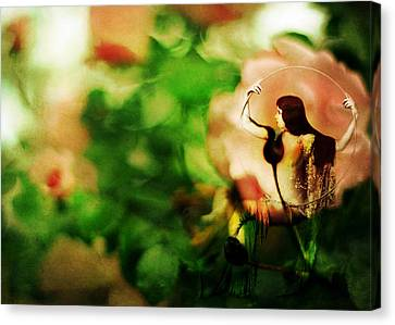 The Wind Around Her Shoulders Canvas Print by Rebecca Sherman