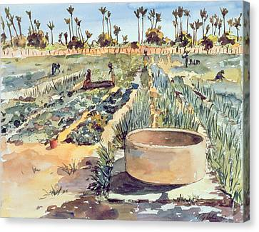 The Wome's Garden  Senegal West Africa Canvas Print by Tilly Willis