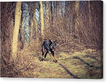 The Working Dog Canvas Print by Shelley Smith