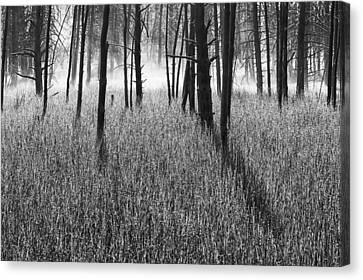 The Wrath Canvas Print by Mark Kiver