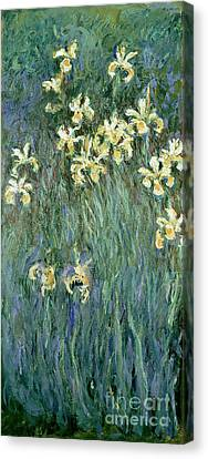 The Yellow Irises Canvas Print by Claude Monet