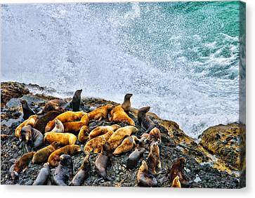 This Is Oregon State No.18 - Sea Lion Splash Canvas Print by Paul W Sharpe Aka Wizard of Wonders