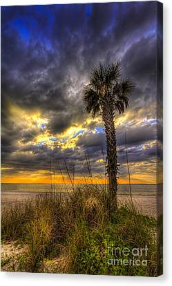 This Is Your Spot Canvas Print by Marvin Spates
