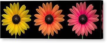 Three Flowers Canvas Print by Hudson Marsh