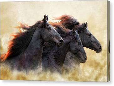Three Horse Power Canvas Print by Ron  McGinnis