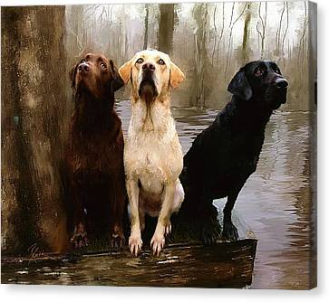 Three Labs Canvas Print by Robert Smith