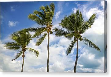 Three Palms Canvas Print by Karen Wiles