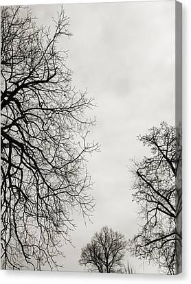Three Trees Canvas Print by Linda Woods