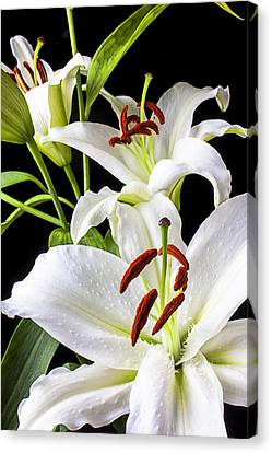 Three White Lilies Canvas Print by Garry Gay