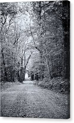 Through The Forest Canvas Print by Sue OConnor
