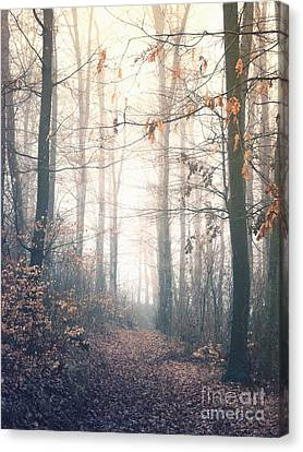 Through The Trees Canvas Print by Mark Borbely