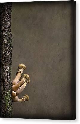 Ties That Bind Canvas Print by Evelina Kremsdorf