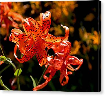 Tiger Lilies Canvas Print by Rona Black