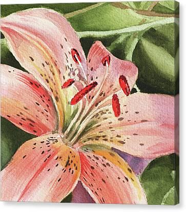 Tiger Lily Close Up Canvas Print by Irina Sztukowski